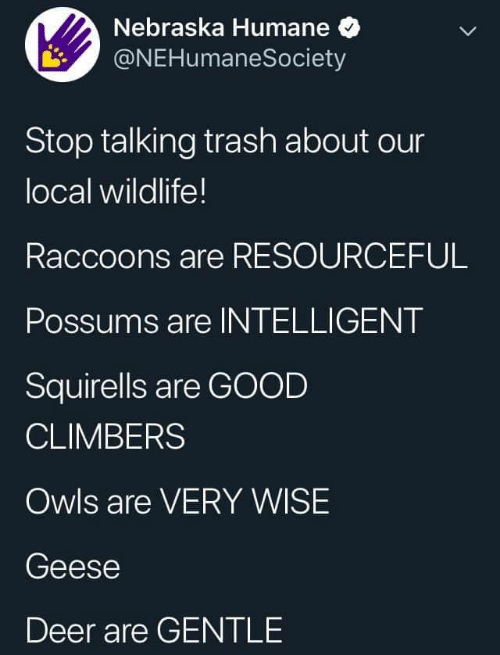 Nebraska: Nebraska Humane  @NEHumaneSociety  Stop talking trash about our  local wildlife!  Raccoons are RESOURCEFUL  Possums are INTELLIGENT  Squirells are GOOD  CLIMBERS  Owls are VERY WISE  Geese  Deer are GENTLE