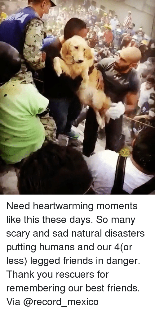 Friends, Memes, and Thank You: Need heartwarming moments like this these days. So many scary and sad natural disasters putting humans and our 4(or less) legged friends in danger. Thank you rescuers for remembering our best friends. Via @record_mexico
