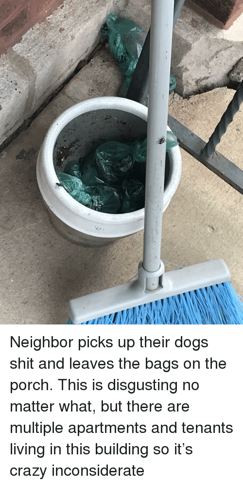 Crazy, Dogs, and Shit