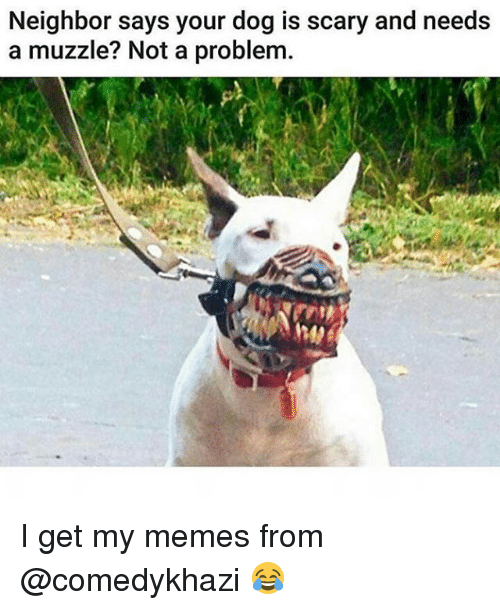 Memes, 🤖, and Dog: Neighbor says your dog is scary and needs  a muzzle? Not a problem. I get my memes from @comedykhazi 😂