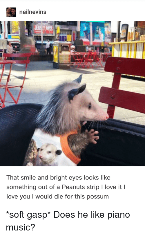 Possum: neilnevins  That smile and bright eyes looks like  something out of a Peanuts strip I love it I  love you I would die for this possum *soft gasp* Does he like piano music?