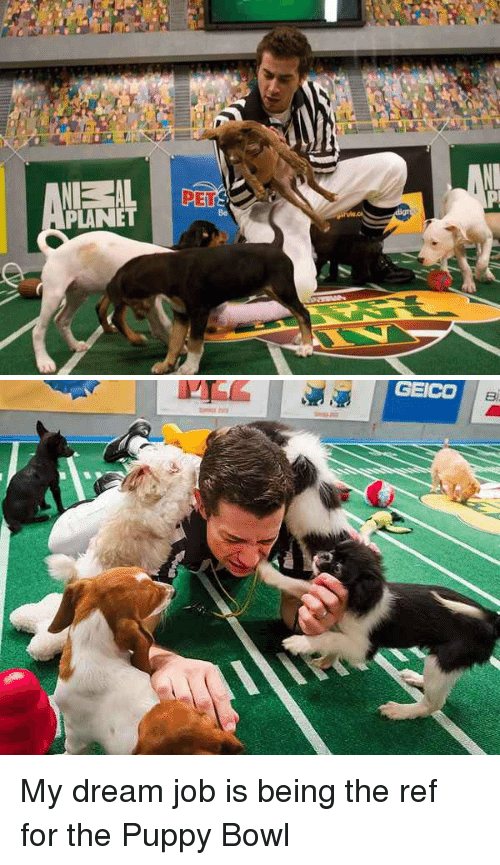 Puppies, Jobs, and Planets: NEL-AL PErs.  PLANET   GEICO My dream job is being the ref for the Puppy Bowl