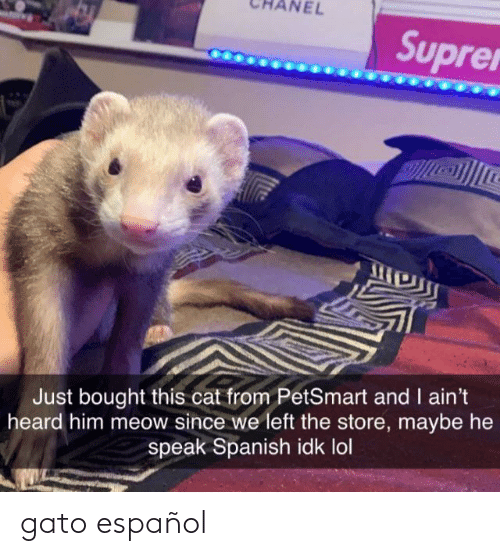 espanol: NEL  Suprer  Just bought this cat from PetSmart and I ain't  heard him meow since we left the store, maybe he  speak Spanish idk lol gato español