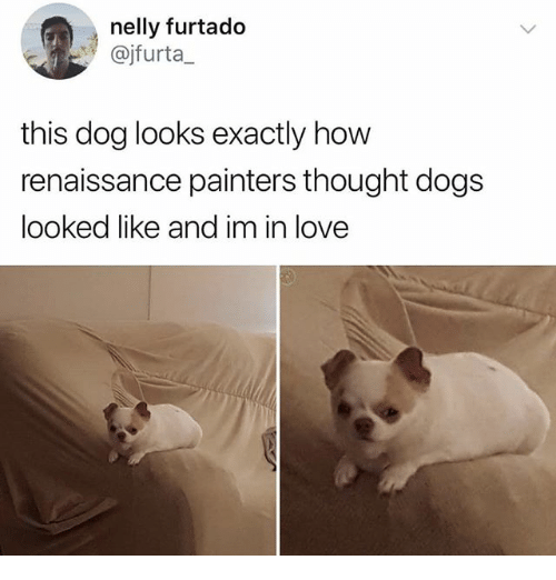 Dogs, Love, and Memes: nelly furtado  @jfurta_  this dog looks exactly how  renaissance painters thought dogs  looked like and im in love