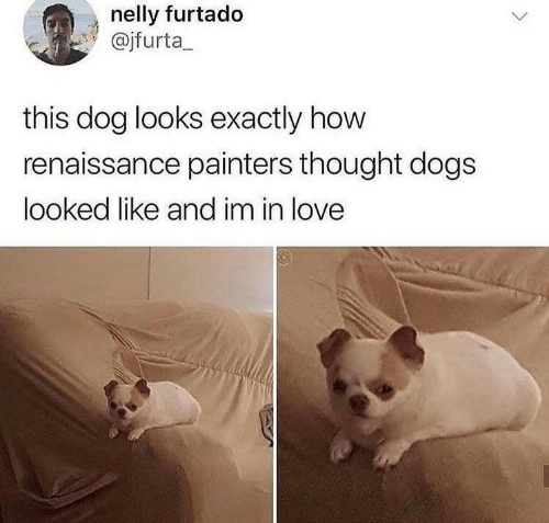 Nelly: nelly furtado  @jfurta_  this dog looks exactly how  renaissance painters thought dogs  looked like and im in love