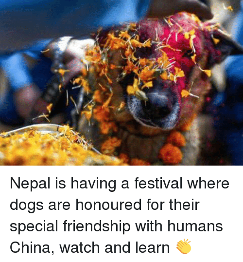 Dogs: Nepal is having a festival where dogs are honoured for their special friendship with humans China, watch and learn 👏