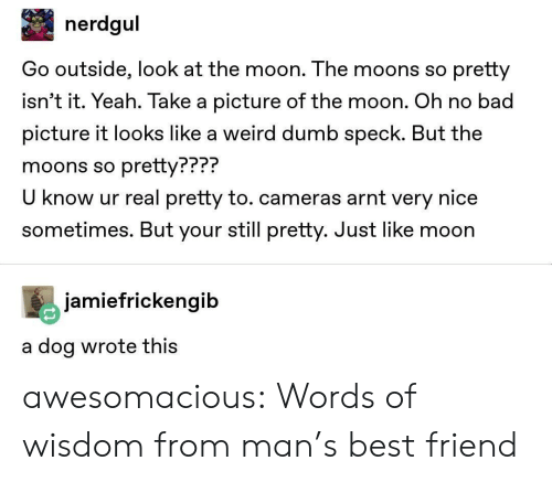 Words Of Wisdom: nerdgul  Go outside, look at the moon. The moons so pretty  isn't it. Yeah. Take a picture of the moon. Oh no bad  picture it looks like a weird dumb speck. But the  moons so pretty???  U know ur real pretty to. cameras arnt very nice  sometimes. But your still pretty. Just like moon  PPP?  jamiefrickengib  a dog wrote thiS awesomacious:  Words of wisdom from man's best friend