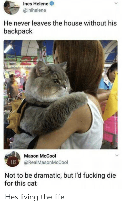 Living The: nes Helene  @inihelene  He never leaves the house without his  backpack  Mason McCool  @RealMasonMcCool  16  Not to be dramatic, but l'd fucking die  for this cat Hes living the life