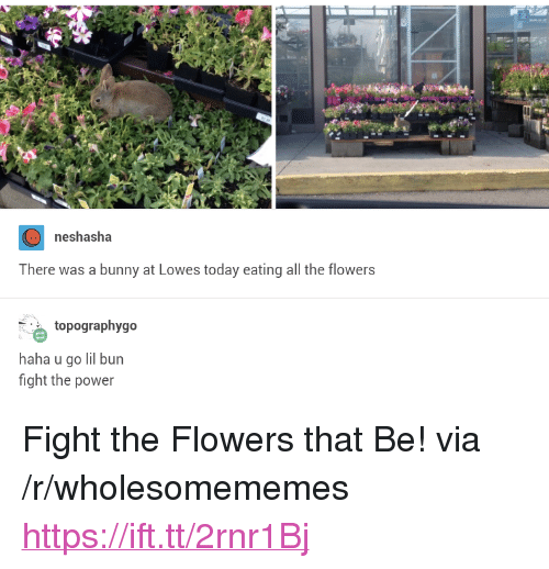 "Flowers, Lowes, and Power: neshasha  There was a bunny at Lowes today eating all the flowers  topographygo  haha u go lil bun  fight the power <p>Fight the Flowers that Be! via /r/wholesomememes <a href=""https://ift.tt/2rnr1Bj"">https://ift.tt/2rnr1Bj</a></p>"