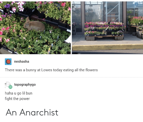 Lowes: neshasha  There was a bunny at Lowes today eating all the flowers  topographygo  haha u go lil bun  fight the power An Anarchist