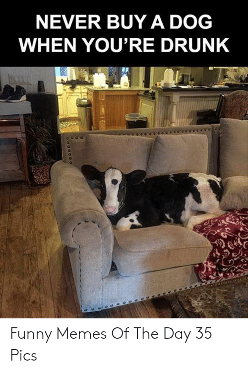 Youre Drunk: NEVER BUY A DOG  WHEN YOU'RE DRUNK Funny Memes Of The Day 35 Pics