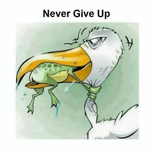never give up 6039894 never give up meme on sizzle