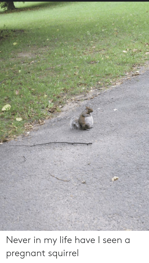 I Seen: Never in my life have I seen a pregnant squirrel