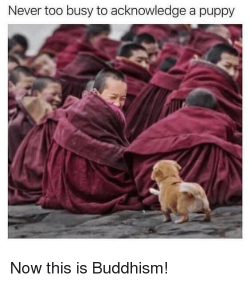 Buddhism: Never too busy to acknowledge a puppy Now this is Buddhism!
