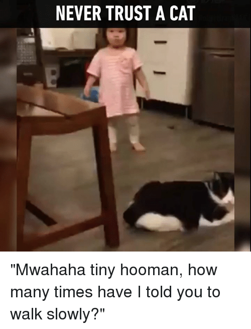 """Dank, How Many Times, and Time: NEVER TRUST A CAT """"Mwahaha tiny hooman, how many times have I told you to walk slowly?"""""""