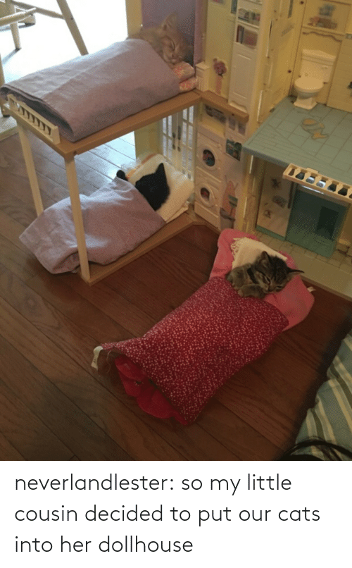 my little: neverlandlester:  so my little cousin decided to put our cats into her dollhouse