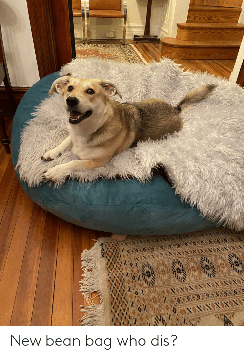 Who dis: New bean bag who dis?