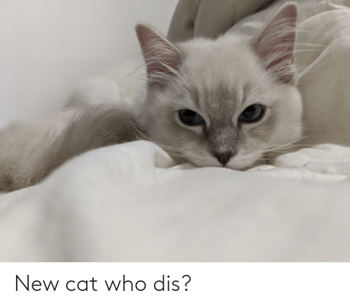 Who dis: New cat who dis?