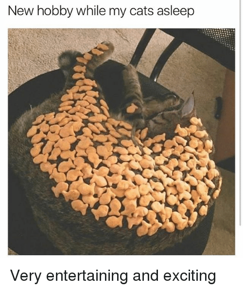 Cats, Funny, and Girl Memes: New hobby while my cats asleep Very entertaining and exciting