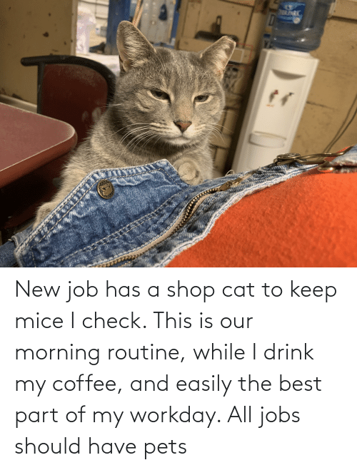 morning routine: New job has a shop cat to keep mice I check. This is our morning routine, while I drink my coffee, and easily the best part of my workday. All jobs should have pets