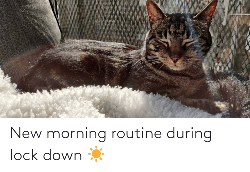 morning routine: New morning routine during lock down ☀
