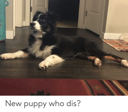 Who dis: New puppy who dis?