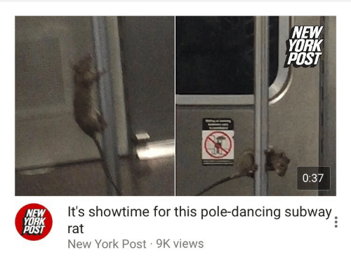 pole dancing: NEW  YORK  POST  0:37  NEW  YORK  POST  It's showtime for this pole-dancing subway,  rat  New York Post 9K views