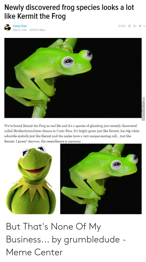 Frog Species: Newly discovered frog species looks a lot  like Kermit the Frog  61,372 d 50 ★  Casey Chan  Fled to: FUN 4/20/15 6:48pm  We've found Kermit the Frog in real life and it's a species of glassfrog just recently discovered  called Hyalinobatrachium dianae in Costa Rica. It's bright green just like Kermit, has big white  adorable eyeballs just like Kermit and the males have a very unique mating cal... just like  Kermit, I guess? Anyway, the resemblance is uncanny But That's None Of My Business... by grumbledude - Meme Center