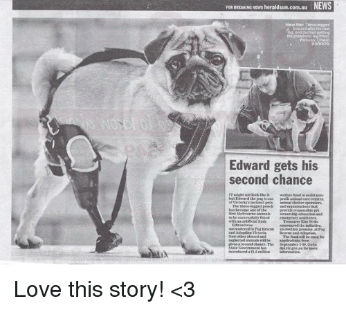 provident: NEWS  FOREREAKING NEws heraldsun.com.au  Edward gets his  second chance  weltare to assistaen.  animal Shelter operators  three-legged poeeh  basbeeoame one ofthe  provide respoltible pet  nrit Melbourne animals  owmeesalpeducatiea and  to be successfully nited  eesergency assistance.  with a artinciallimb,  aseouwced the initiative.  The fund will6e open  Beglected animab will be  lcheaasecondehawee The September Goto  dpiwitgow.au for more Love this story! <3