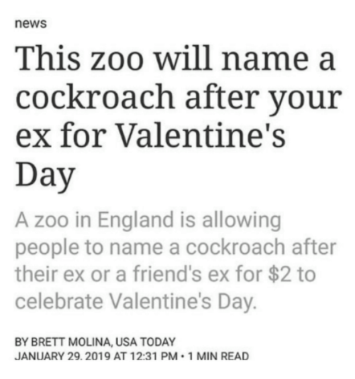 Usa Today: news  This zoo will name a  cockroach after your  ex for Valentine's  Day  A zoo in England is allowing  people to name a cockroach after  their ex or a friend's ex for $2 to  celebrate Valentine's Day.  BY BRETT MOLINA, USA TODAY  JANUARY 29.2019 AT 12:31 PM 1 MIN READ