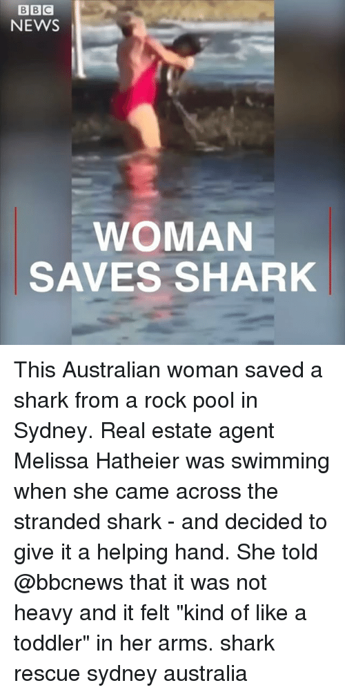 "Memes, News, and Shark: NEWS  WOMAN  SAVES SHARK This Australian woman saved a shark from a rock pool in Sydney. Real estate agent Melissa Hatheier was swimming when she came across the stranded shark - and decided to give it a helping hand. She told @bbcnews that it was not heavy and it felt ""kind of like a toddler"" in her arms. shark rescue sydney australia"