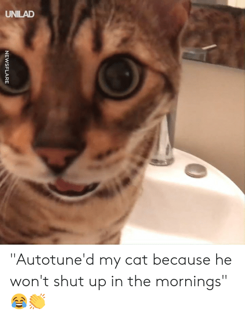 "Mornings: NEWSFLARE ""Autotune'd my cat because he won't shut up in the mornings"" 😂👏"