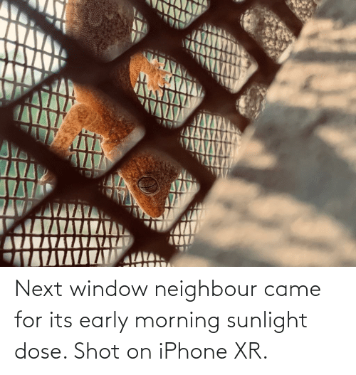 dose: Next window neighbour came for its early morning sunlight dose. Shot on iPhone XR.