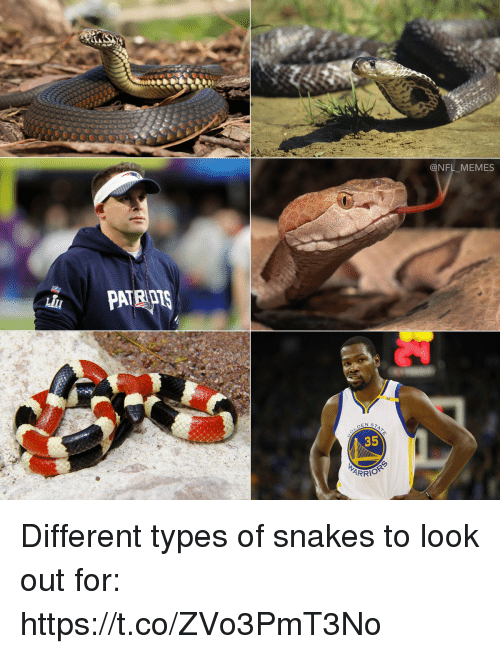 Football, Memes, and Nfl: @NFL MEMES  35  ARRI Different types of snakes to look out for: https://t.co/ZVo3PmT3No