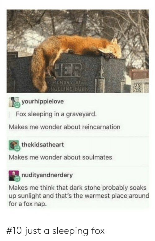 soulmates: NGELINEBULRSS  yourhippielove  Fox sleeping in a graveyard.  Makes me wonder about reincarnation  thekidsatheart  Makes me wonder about soulmates  nudityandnerdery  Makes me think that dark stone probably soaks  up sunlight and that's the warmest place around  for a fox nap #10 just a sleeping fox