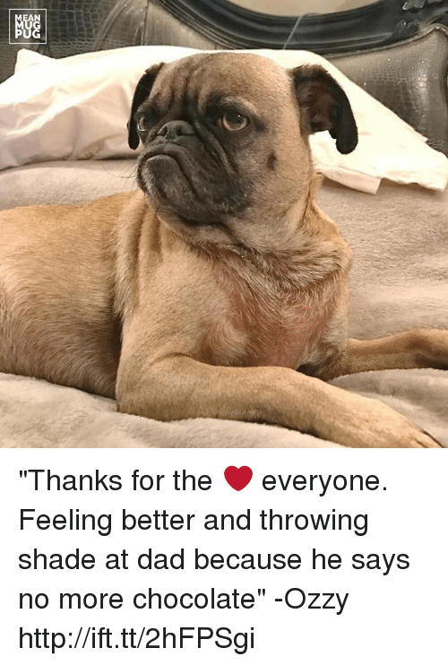 "throw shade: NGG ""Thanks for the ❤ everyone. Feeling better and throwing shade at dad because he says no more chocolate"" -Ozzy http://ift.tt/2hFPSgi"