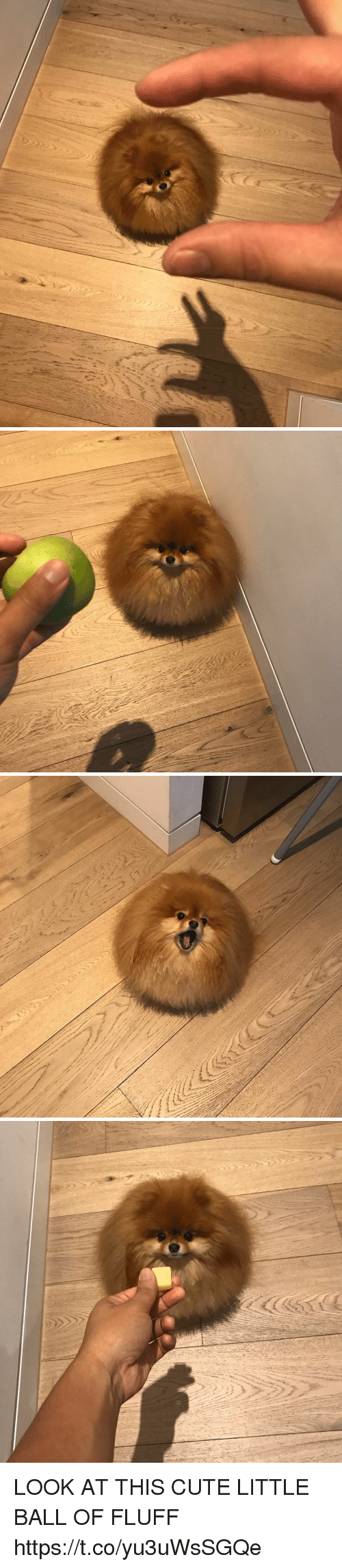 Cute, Girl Memes, and Looking: ni LOOK AT THIS CUTE LITTLE BALL OF FLUFF https://t.co/yu3uWsSGQe