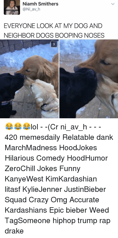 Crazy, Dank, and Dogs: Niamh Smithers  (a Ni av h  EVERYONE LOOK AT MY DOG AND  NEIGHBOR DOGS BOOPING NOSES 😂😂😂lol - -(Cr ni_av_h - - - 420 memesdaily Relatable dank MarchMadness HoodJokes Hilarious Comedy HoodHumor ZeroChill Jokes Funny KanyeWest KimKardashian litasf KylieJenner JustinBieber Squad Crazy Omg Accurate Kardashians Epic bieber Weed TagSomeone hiphop trump rap drake