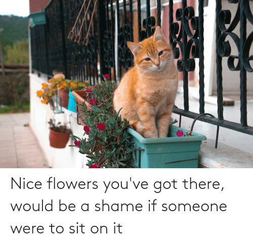 Youve Got: Nice flowers you've got there, would be a shame if someone were to sit on it