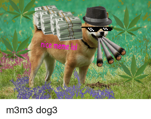 meme: nice meme lol <p>m3m3 dog3</p>