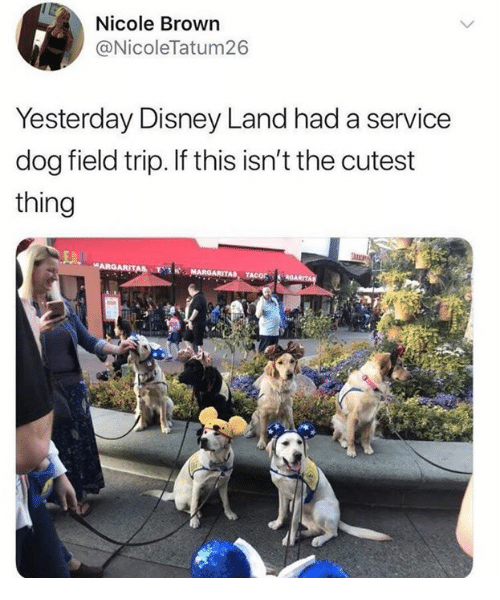 Dank, Disney, and Field Trip: Nicole Brown  @NicoleTatum26  Yesterday Disney Land had a service  dog field trip. If this isn't the cutest  thing