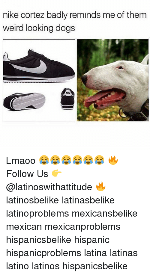 Dogs, Latinos, and Memes: nike cortez badly reminds me of them  weird looking dogs  WIK Lmaoo 😂😂😂😂😂😂 🔥 Follow Us 👉 @latinoswithattitude 🔥 latinosbelike latinasbelike latinoproblems mexicansbelike mexican mexicanproblems hispanicsbelike hispanic hispanicproblems latina latinas latino latinos hispanicsbelike
