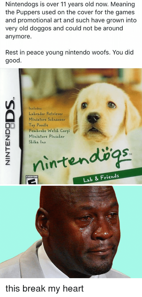 Corgi, Friends, and Funny: Nintendogs is over 11 years old now. Meaning  the Puppers used on the cover for the games  and promotional art and such have grown into  very old doggos and could not be around  anymore.  Rest in peace young nintendo woofs. You did  good  Includes:  Labrador Retriever  Miniature Sckhauzer  Toy Poodle  Pembroke Welsk Corgi  Miniature Pins cker  Skiba hu  Lab & Friends  EVERYONE this break my heart