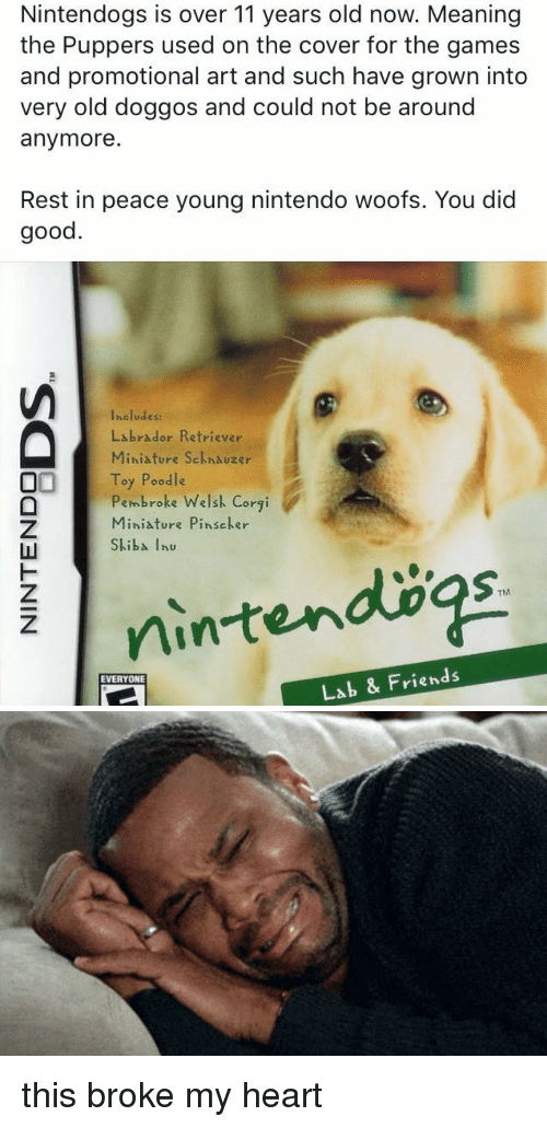 Corgi, Friends, and Funny: Nintendogs is over 11 years old now. Meaning  the Puppers used on the cover for the games  and promotional art and such have grown into  very old doggos and could not be around  anymore  Rest in peace young nintendo woofs. You did  good  Includes:  Labrador Retriever  Miniature Sckhauzer  OI Toy Poodle  broke Welsk Corgi  eh Miniature Pinscher  iba Thu  TM  Lab & Friends  EVERYONE this broke my heart