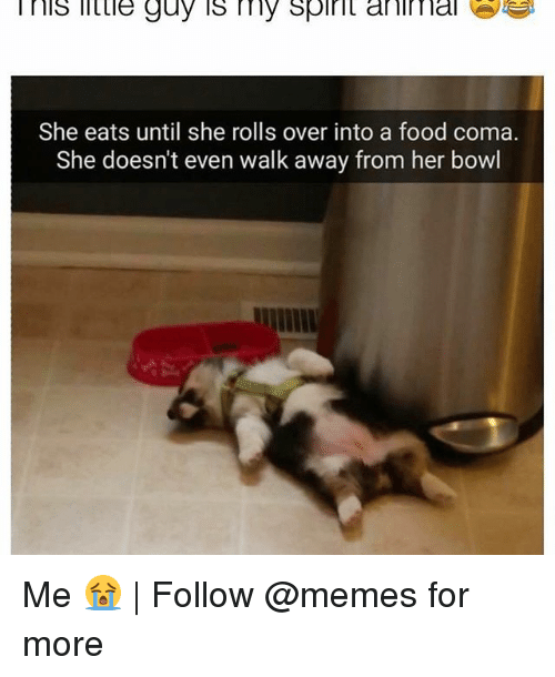 Food, Memes, and Spirit: nis little guy is my spirit ani nal e  She eats until she rolls over into a food coma.  She doesn't even walk away from her bowl Me 😭   Follow @memes for more