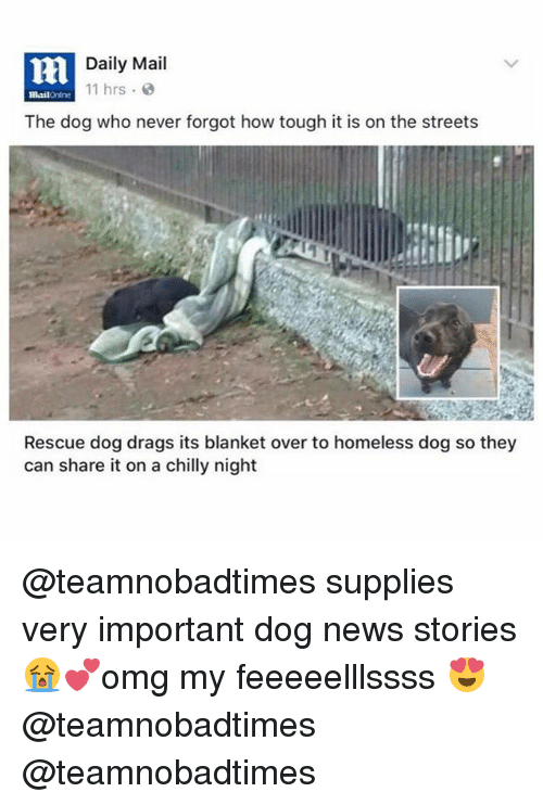 Homeless, Memes, and News: nl  Daily Mail  11 hrs  mail rine  The dog who never forgot how tough it is on the streets  Rescue dog drags its blanket over to homeless dog so they  can share it on a chilly night @teamnobadtimes supplies very important dog news stories 😭💕omg my feeeeelllssss 😍 @teamnobadtimes @teamnobadtimes