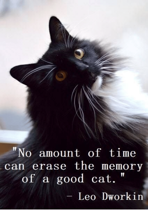 "Good Cat: ""No amount of time  can erase the memory  of a good cat.  Leo Dworkin"