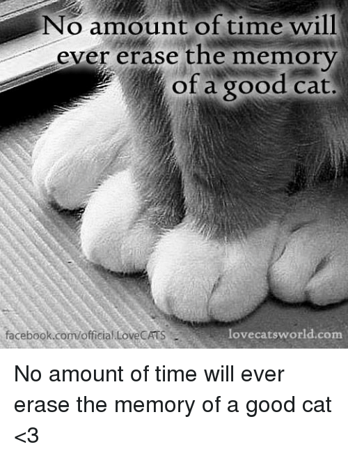 Good Cat: No amount of time will  ever erase the memory  of a good cat.  lovecats world.com  facebook.com/official LoveCATS No amount of time will ever erase the memory of a good cat <3