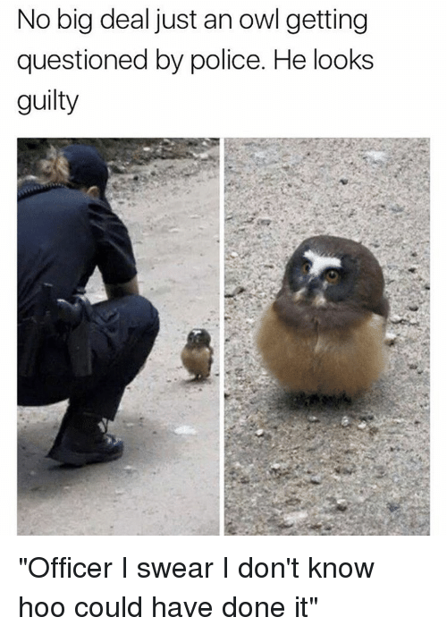 """Memes and 🤖: No big deal just an owl getting  questioned by police. He looks  guilty """"Officer I swear I don't know hoo could have done it"""""""