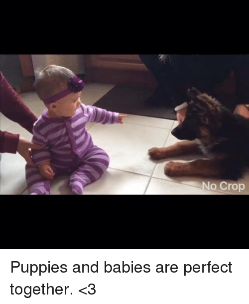 Baby, It's Cold Outside: No Crop Puppies and babies are perfect together. <3